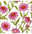 echinace purpurea pattern vector image