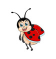 ladybug cartoon funny isolated on white vector image