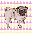 puppy pug vector image