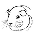stylized guinea pig head vector image vector image