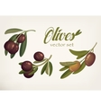 Yellow and ripe berries of olives with bleaks vector image
