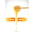 honey dripping from a wooden dipper vector image