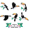 set of cartoon toucans sitting on brench flying vector image