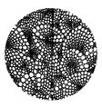 circle design vector image vector image