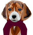 dog in scarf vector image