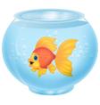 Gold fish in aquarium vector image vector image