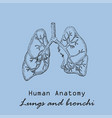 handdrawn human lungs vector image vector image