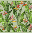 seamless pattern with strelitzia bird of paradise vector image