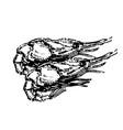 shrimp sea food hand drawn sketch vector image vector image