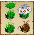 Stages of growth daisies planting and withering vector image vector image