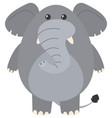 gray elephant on white background vector image