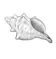 sea shell hand drawn black linear vector image