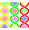 DNA Symbols vector image