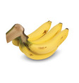 realistic yellow ripe banana isolate on white vector image