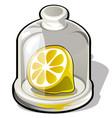 cut half of a fresh lemon under a glass dome vector image