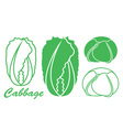 Cabbage Chinese Cabbage vector image vector image