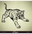 wild tiger vector image vector image