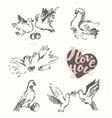 Drawn wedding pigeon love symbol sketch vector image