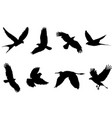 bird animal cartoon shape form silhouette vector image