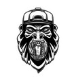 gorilla in baseball cap on white background vector image vector image