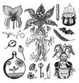 mythical mandrake plant in vintage style fantasy vector image