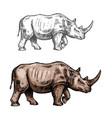 rhinoceros sketch wild animal icon vector image