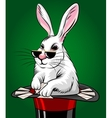 Rabbit with Cards vector image vector image