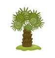 tropical palm tree with wide leaves cartoon icon vector image