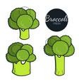 fresh organic broccoli isolated on white vector image vector image