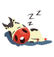 cow is sleeping on white background vector image vector image