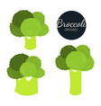 fresh flat organic broccoli isolated on white vector image