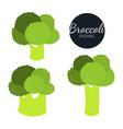 fresh flat organic broccoli isolated on white vector image vector image
