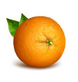 orange whole with leaves vector image vector image