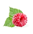 rasberries with green leaves vector image vector image
