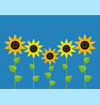 sunflower symbols vector image