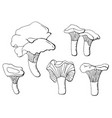 black and white set chanterelle mushrooms vector image vector image