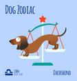 a zodiac sign with a funny dog vector image