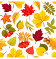 autumn leaves seamless pattern isolated on vector image vector image
