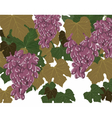 Grapes clusters set vector image vector image