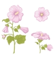 flowers mallow isolated vector image vector image