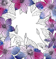 frame with beautiful clematis flowers vector image