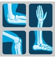 Human joints knee and elbow ankle wrist Medical vector image vector image