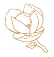 magnolia flower with branch in gold color vector image