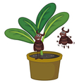 A plant with two playful insects vector image vector image