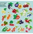 collection of isolated garden and wild vector image vector image