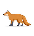 fox standing on a white background vector image