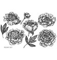 set hand drawn black and white peony vector image