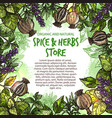 sketch spices and herbs farm store poster vector image vector image