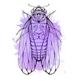 cicada with boho pattern and watercolor splashes vector image vector image
