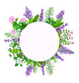 herbes de provence thyme savory rosemary vector image vector image
